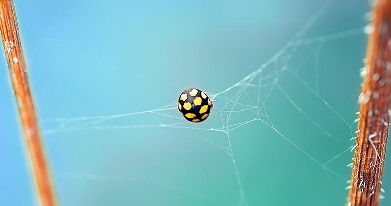 fixing-web-bugs